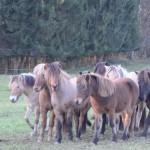 DSC_9114 Pferdejungs